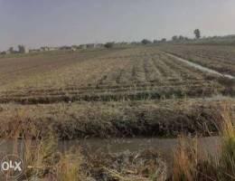 ارض زراعية للبيع في المنصوره سرسو الدنابيق