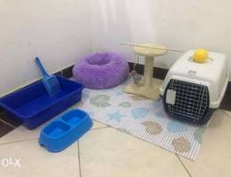 Cats Essentials and Toys